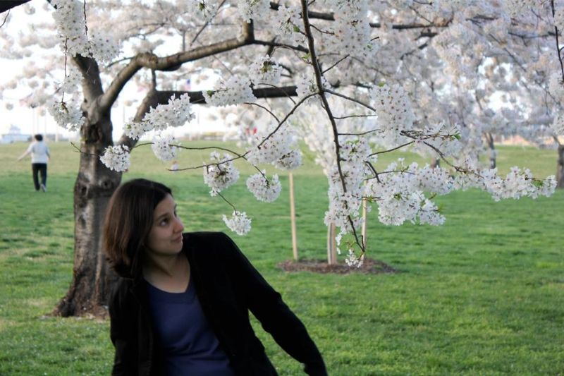 Excuse Me, Cherry Blossoms