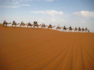 Camels_desert